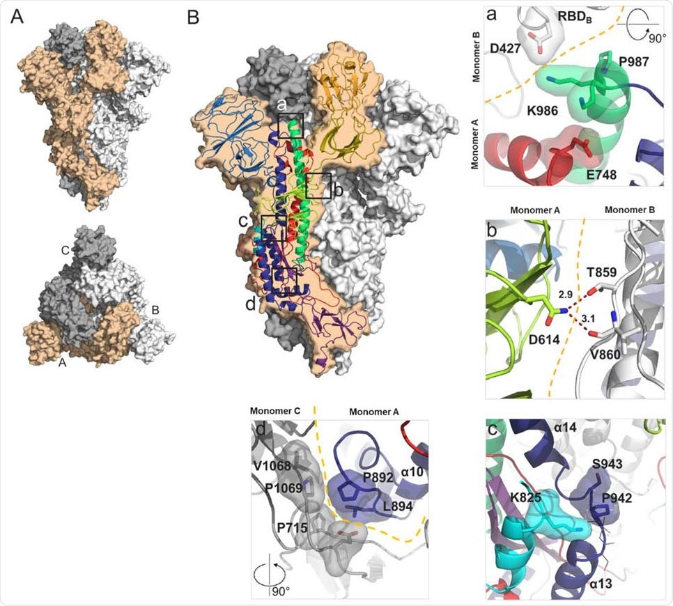 Structural characterization of S-closed. (A) Cryo-EM structure of the most abundant trimer class of S-closed-Fd – a closed S protein trimer. Monomers are colored in light orange, white and grey and the spike is shown from the side (upper panel) and from the top (lower panel) view. (B) Each of the four single point mutations introduced in S-closed-Fd shown in detail. Domains of the new structure are colored according to the same color code as used in Fig S1. Boundary between monomers has been additionally indicated with orange dashed line when applicable. Two possible rotamers of K986 are shown as one or the other could not be definitively assigned based on the density.