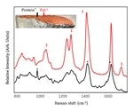 Multi-Attribute Salmon Quality Monitoring