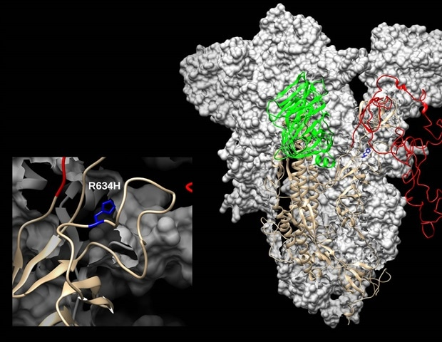 Novel mutation identified in SARS-CoV-2 spike protein from Sweden