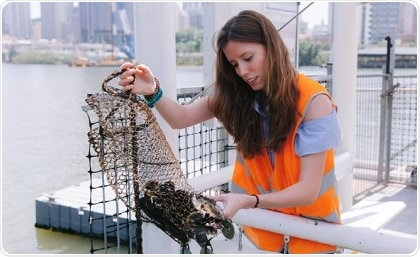 UQ study lead Francisca Ribeiro checking the state of oysters deployed at the Brisbane river