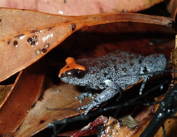 Australian Museum citizen science projects break new records during COVID-19 – News-Medical.net