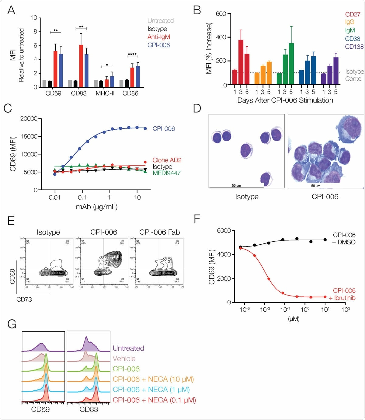 CPI-006 directly activates B lymphocytes and induces maturation into antibody secreting plasmablasts in vitro. (A) Purified B cells from 3-5 healthy donors were incubated overnight with human IgG1 isotype control or CPI-006 (10 μg/mL) or anti-IgM microbeads, a positive control for BCR stimulation. Expression of activation markers CD69, CD83, CD86, or MHC-II was measured by flow cytometry. B) Time dependent increases in the expression of CD27, IgG, IgM, CD38, and CD138 on purified B cells cultured in the presence of CPI-006 or isotype control (1 μg/mL). Mean fluorescence intensity (MFI) was determined for each marker and was normalized to the untreated or isotype control for each donor. C) B cell activation is unique to CPI-006 as other anti-CD73 antibodies do not induce CD69 expression. Expression of CD69 (MFI) was measured by flow cytometry. D) Representative images of purified B cells cultured with isotype control (left panel) or CPI-006 for 2 days. E) Purified B cells were incubated overnight with 10 μg/mL human IgG1 isotype control or CPI-006 or equimolar CPI-006 Fab. CD69 and CD73 were measured on B cells by flow cytometry. (F) Human PBMCs were incubated overnight with a fixed concentration of CPI-006 (10 μg/mL) along with ibrutinib or vehicle control over a range of concentrations. Expression of CD69 on B cells (CD19POSCD3NEG) was measured by flow cytometry. G) Human PBMCs were incubated overnight with 10 μg/mL CPI-006 with or without NECA over a range of concentrations or 10 μM APCP. Expression of CD69 on B cells (CD19+CD3-) was measured by flow cytometry and MFI is reported. Error bars represent mean ± SD. *p<0.05, **p<0.01 as determined by t-test.