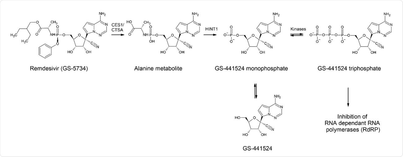 Metabolism of REM (GS-5734) leading to GS-441 524