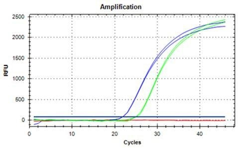 DNA extracted from 100 mg ground hazelnut, amplified and detected with qRT-PCR in duplicates (blue curves undiluted, green curves 1:10 dilution).