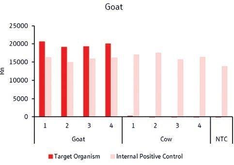 Detection of goat-specific target gene.