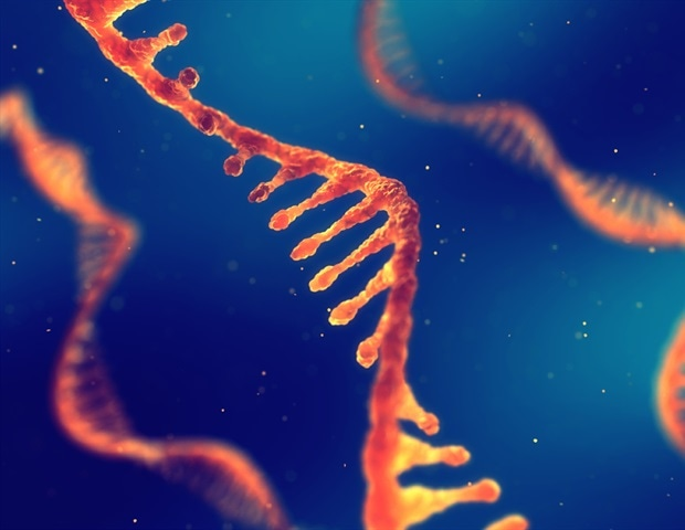Effective simple safe self-amplifying RNA vaccines – News-Medical.Net