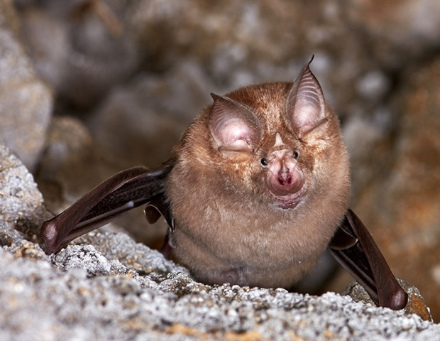 Susceptibility to SARS-CoV-2 infection varies across bat species – News-Medical.Net
