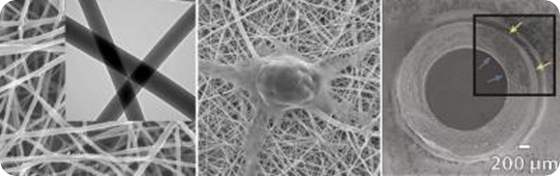 The left panel shows a closeup of chitosan and polyester fibers woven at the nanometer scale. The middle panel shows a nerve cell growing on the resulting mesh, which has a texture similar to the body