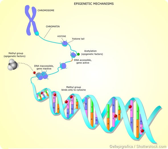 DNA methylation epigentics