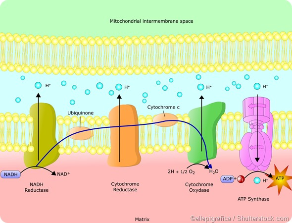 The production and use of ATP in living organisms