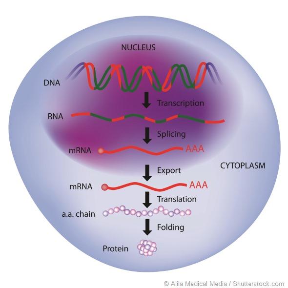Gene expression, central dogma of molecular biology