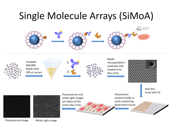 Single Molecular Arrays