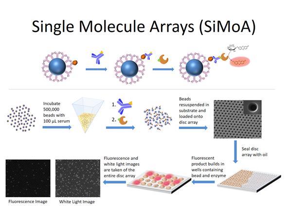 Single Molecular Arrays