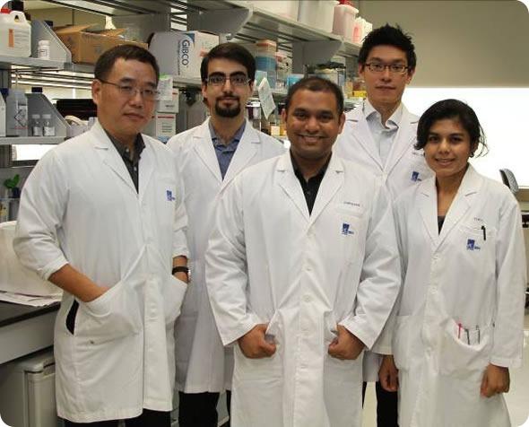 昆虫病毒把握关键对更加安全的干细胞疗法 新加坡科学家
