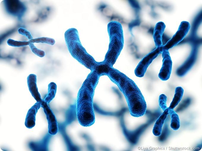 chromosome structure