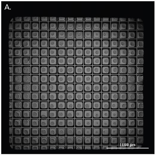 Micro-space imaging at 4x magnification