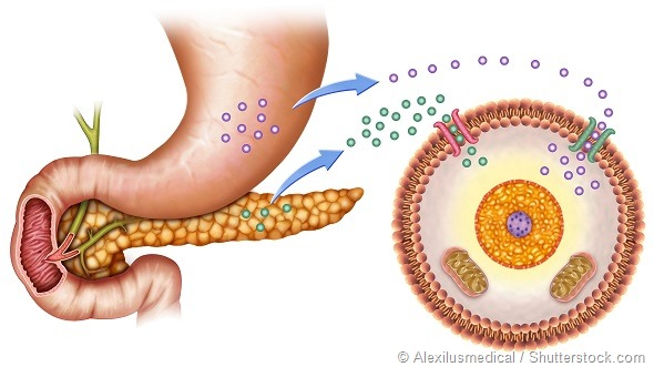schematic illustration of the pancreas and stomach in insulin levels and blood glucose