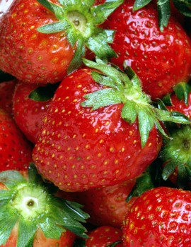 Researchers specializing in the health benefits of plant compounds have shown that quercetin, a phytonutrient found in abundance in strawberries and other fruits, can induce programmed self-destruction of human cancer cells.