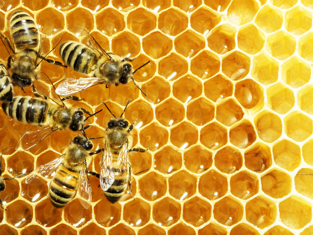 Understanding How NMR Can Help to Prevent Honey Fraud