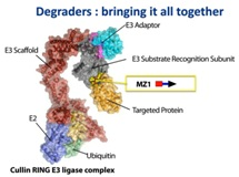 Targeted Protein Degradation and Degrader Development